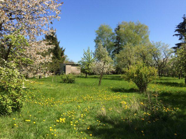 Der große Obstgarten hinter dem Haus Dreesch7