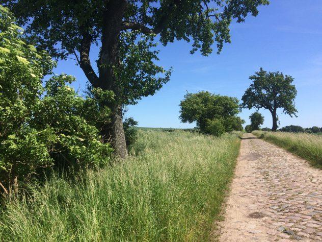 Ein Kopfsteinplasterweg zwischen Feldern und Bäumen führt von Seelübbe nach Prenzlau