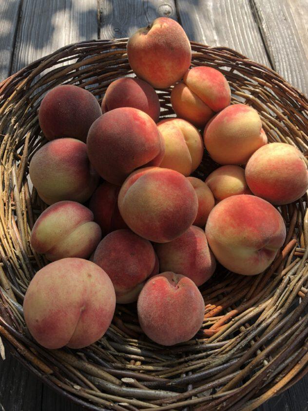 Frisch geerntete Pfirsiche aus der Uckermark